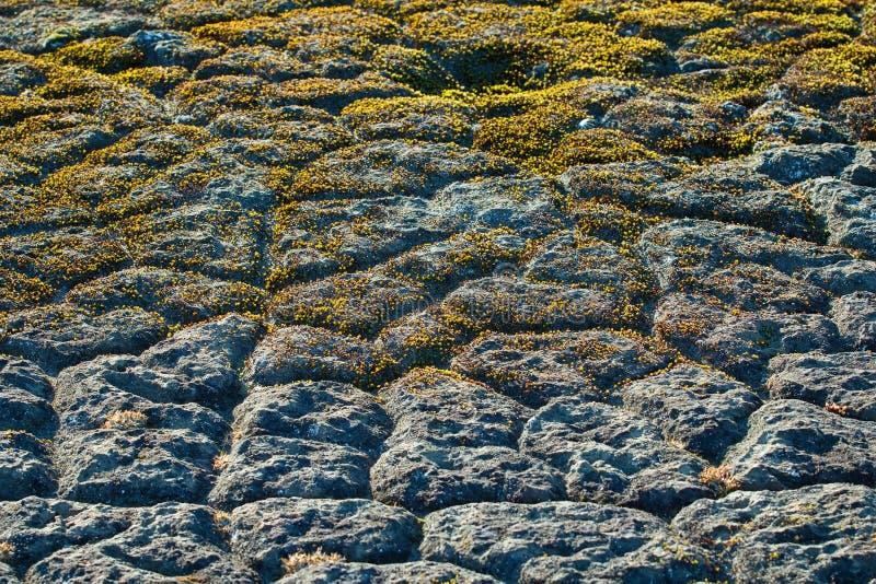 Moose, Polygone des arktischen Bodens lizenzfreie stockbilder