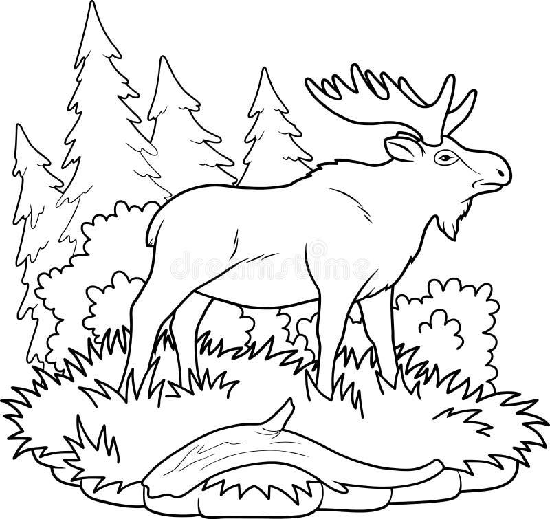 Moose walking through the woods stock illustration