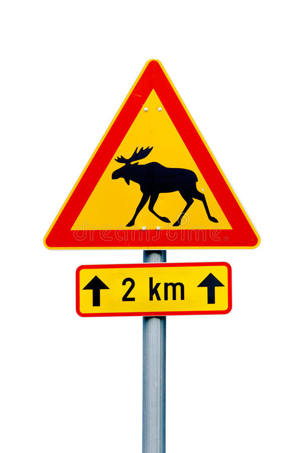 Moose warning sign. Finnish moose warning road sign on white background. Additional pannel indicates danger for the next 2 km royalty free stock images