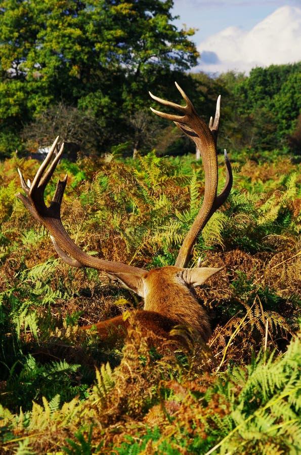 Mooses, deers en al dat materiaal v 4 stock foto