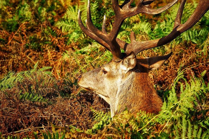 Mooses, deers en al dat materiaal v 2 royalty-vrije stock foto