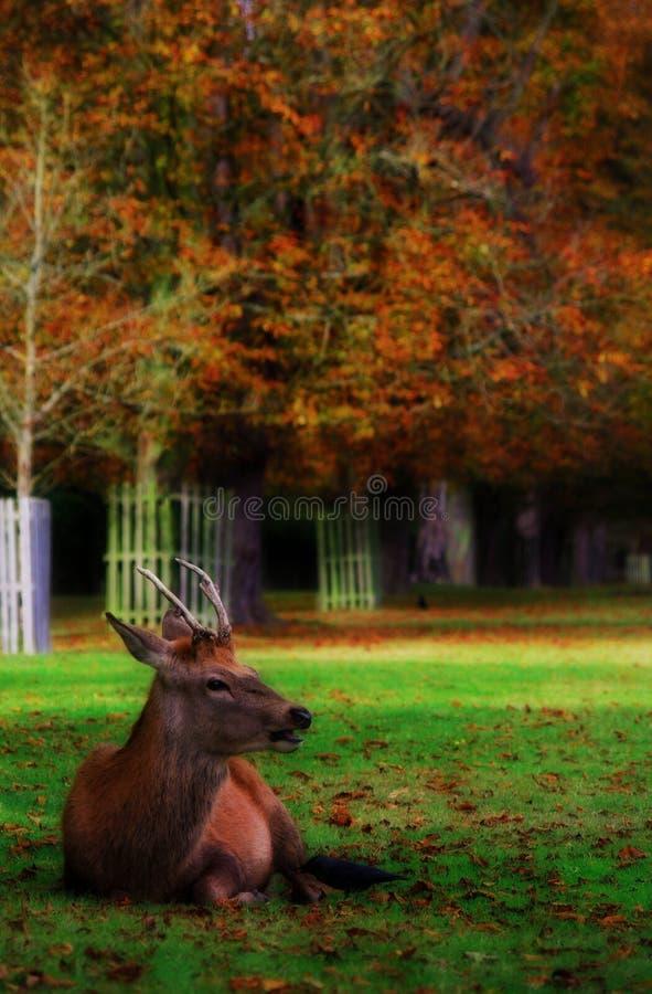 Mooses, deers en al dat materiaal v 6 royalty-vrije stock foto