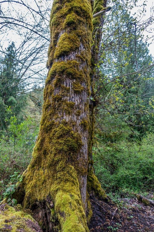 Moosige Baum-Landschaft 2 lizenzfreie stockfotos