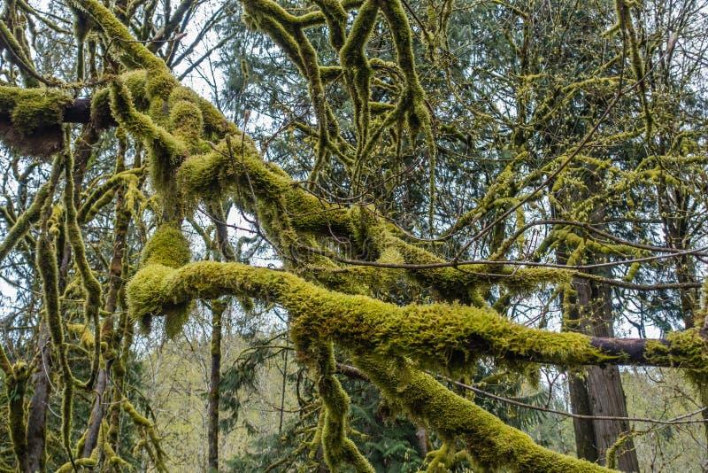 Moosige Baum-Zusammenfassung 9 lizenzfreie stockfotografie