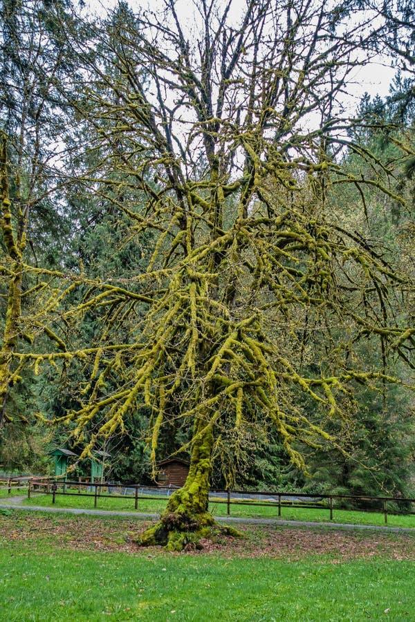 Moosige Baum-Zusammenfassung lizenzfreies stockfoto
