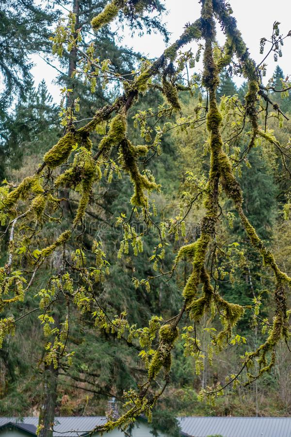 Moosige Baum-Zusammenfassung 4 stockbild