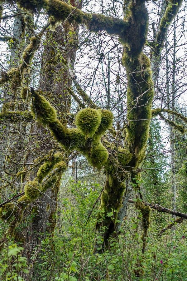 Moosige Baum-Zusammenfassung 2 lizenzfreie stockfotografie