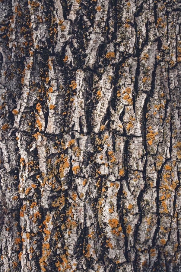Moosige Baumrindebeschaffenheit stockfotografie