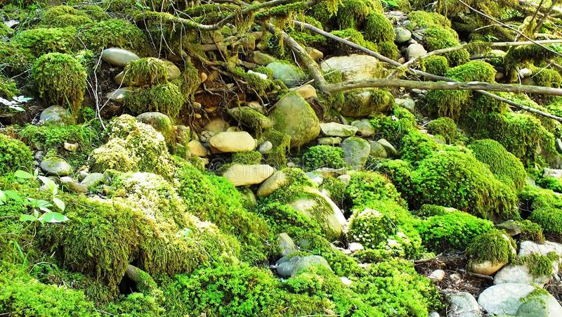 Moosige Felsen stockbilder