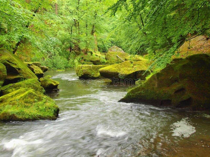 Moosige Flusssteine im Wasser unter frischen grünen Bäumen in Gebirgsfluss lizenzfreie stockfotos