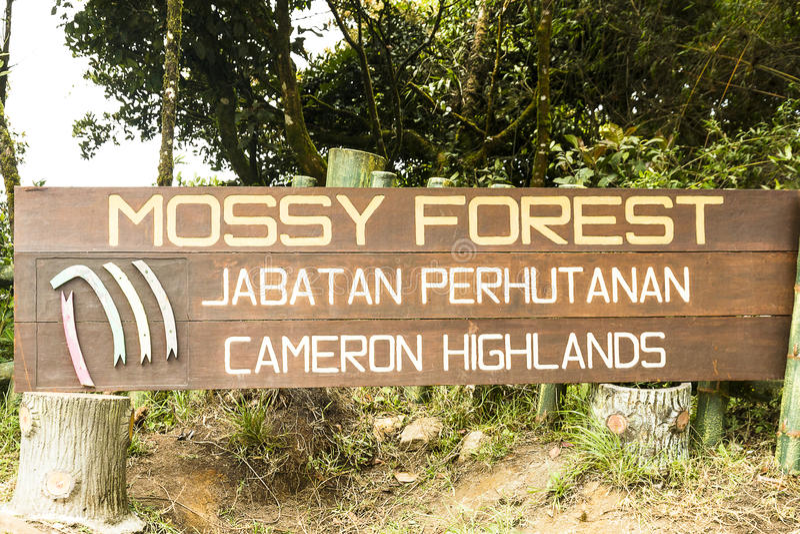 Moosige Wald-Cameron-Hochländer Malaysia stockfotografie