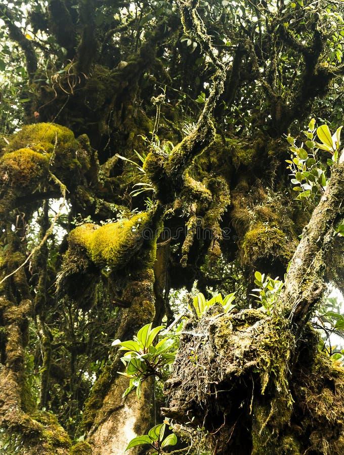 Moosige Wald-Cameron-Hochländer Malaysia lizenzfreie stockbilder