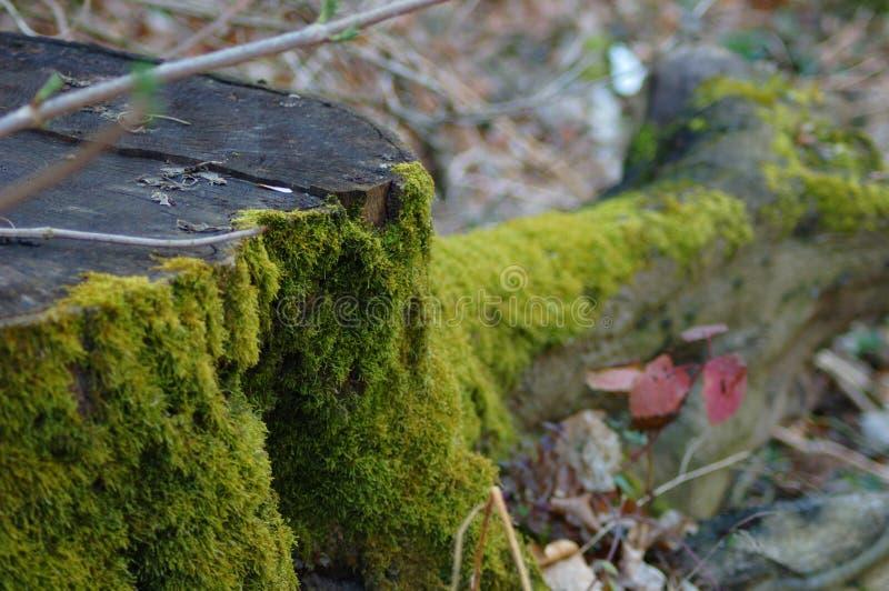 Moosiger Baumstamm in einem Wald stockfotos