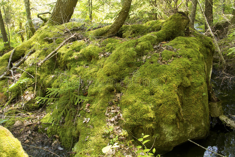 Moosiger Flussstein mit Bäumen, Mountain View See, Sunapee, neues Hamps lizenzfreies stockbild