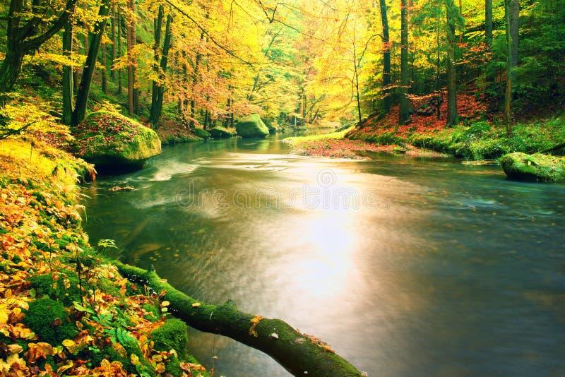 Moosiger gefallener Espenbaum gefallen in Gebirgsfluss Orange und gelbe Ahornblätter, klares Wasser stellt Spiegel her stockbild