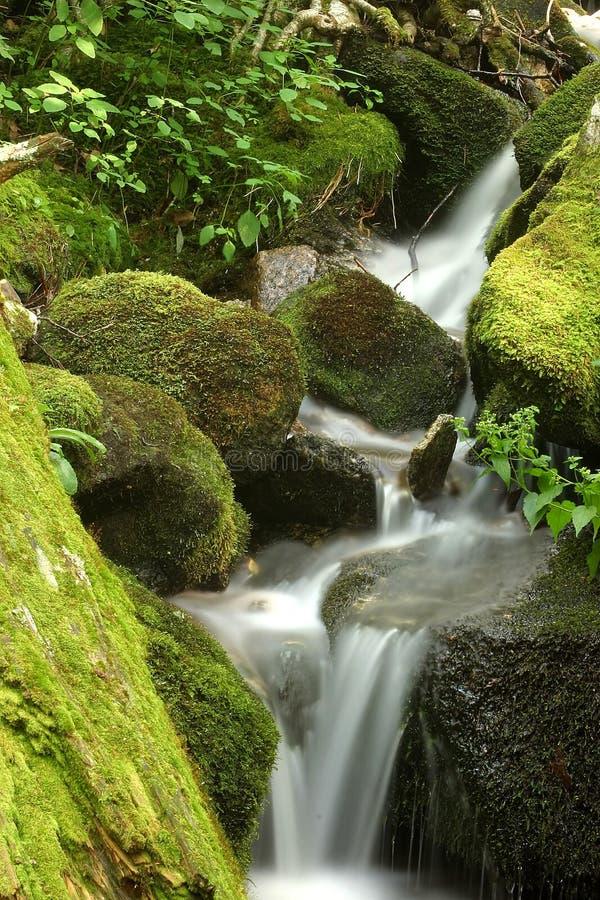 Moosiger Wasserfall lizenzfreie stockfotografie
