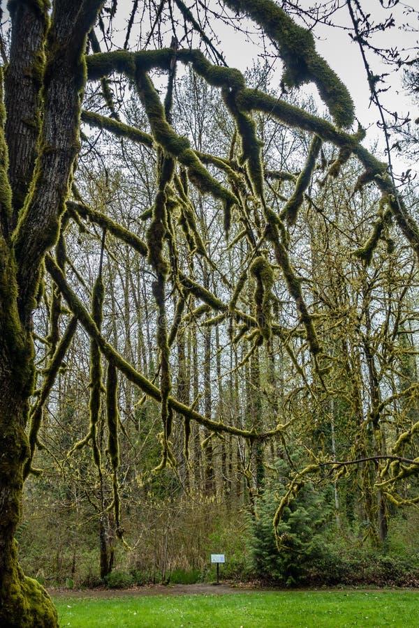 Moosiges Baum-Schattenbild stockbild