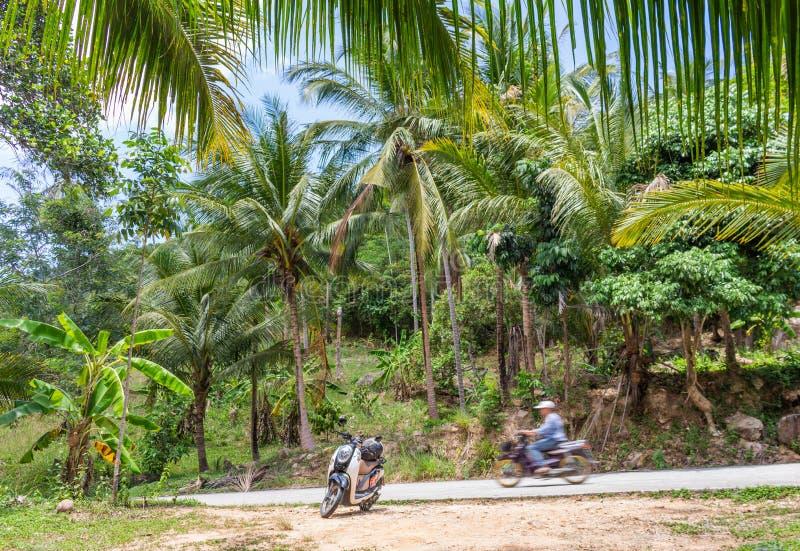 Mopeder i djungeln Koh Samui Thailand arkivbilder