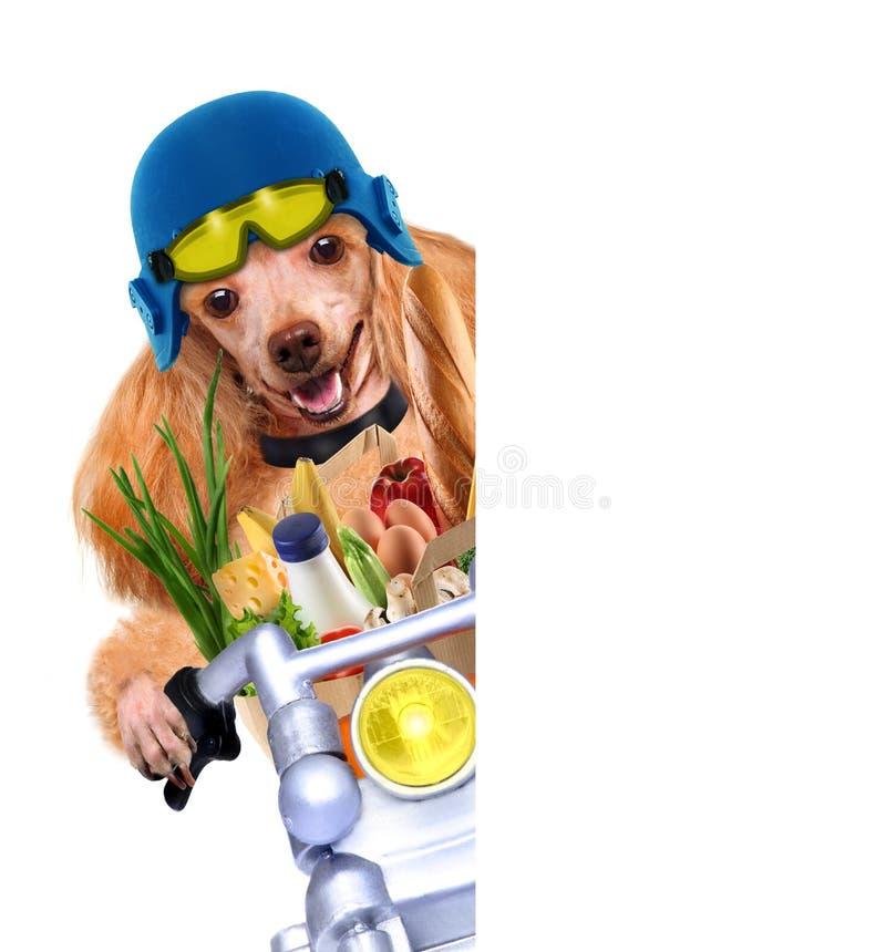 Mopedhund royaltyfri foto