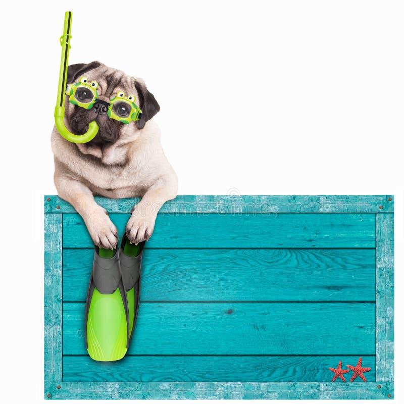 Mopsa pies z błękitnego rocznika plaży drewnianym znakiem z gogle, snorkel i flippers dla lata odizolowywającymi na białym tle, fotografia stock