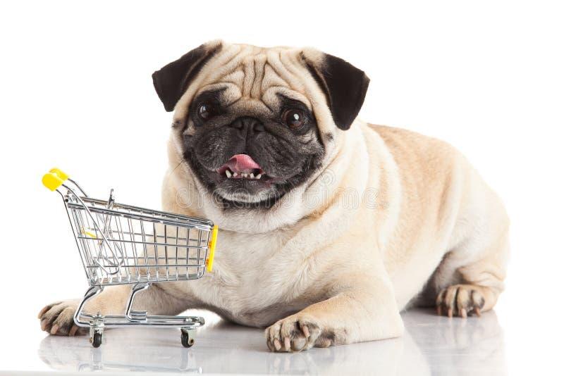 Mopsa pies z wózek na zakupy zdjęcie royalty free