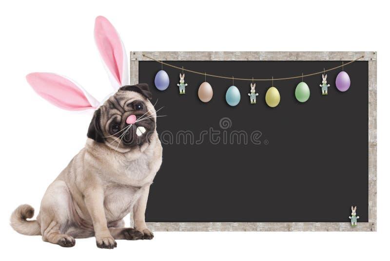 Mopsa szczeniaka pies z królików ucho diademu obsiadaniem obok pustego blackboard znaka z Easter dekoracją na białym tle, obraz royalty free