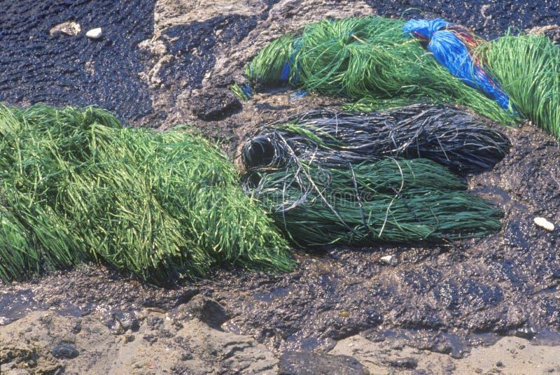 Mopy absorbentu materiał dla usunięcia basen rozlewający olej od Huntington plaży, Kalifornia obraz royalty free