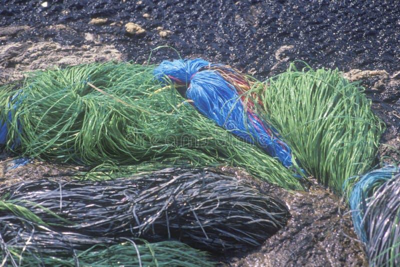 Mopy absorbentu materiału obsiadanie w basenie rozlewający olej pomagać usuwać mnie od Huntington plaży, Kalifornia obraz royalty free
