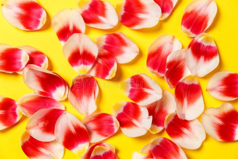 Moquerie élégante féminine avec la fleur de tulipe, pétales L'espace de copie pour votre conception, mariages, invitations, blogs photographie stock libre de droits