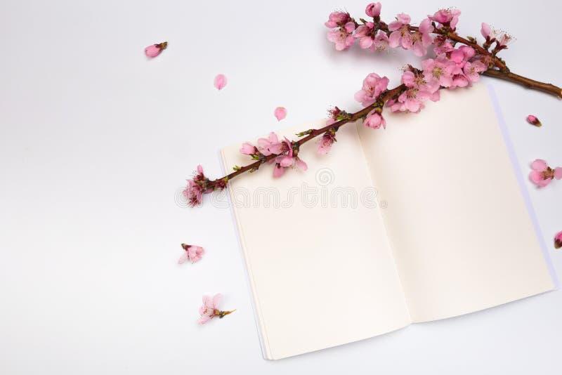 Moquerie vers le haut de carnet et de brins de l'abricotier avec des fleurs sur le fond blanc Place pour le texte Le concept du r image libre de droits