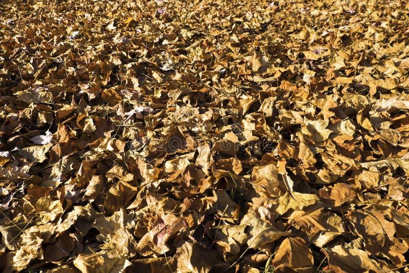 Moquette dei fogli di autunno immagine stock libera da diritti