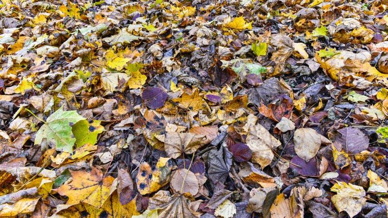 Moquette dei fogli di autunno immagini stock