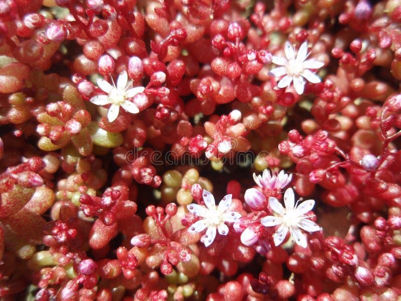Download Moquette del fiore immagine stock. Immagine di bianco - 7302761