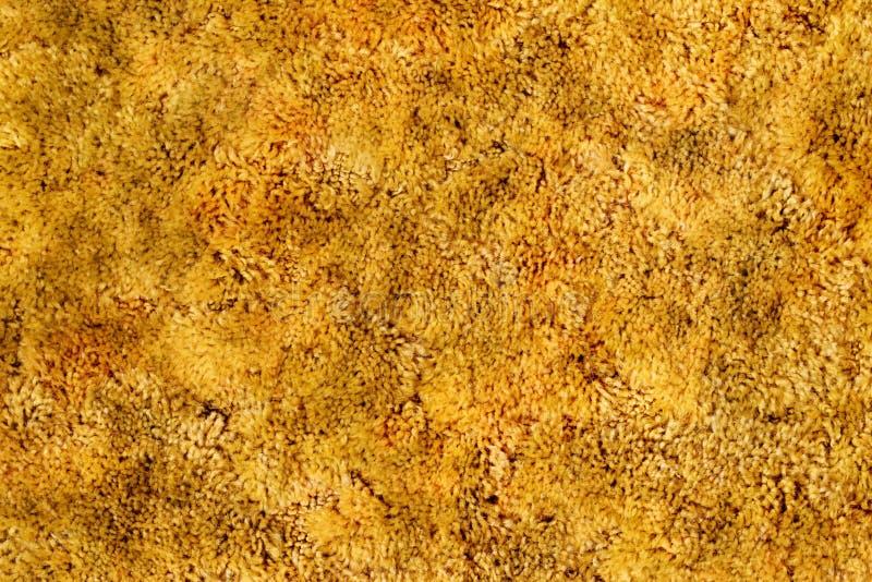 Moquette del tessuto felpato dell'oro fotografia stock
