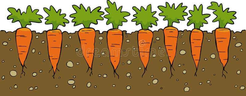 Morötter stock illustrationer