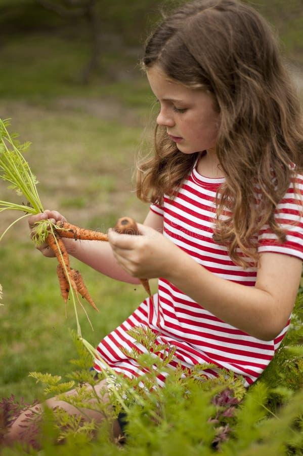 morötter arbeta i trädgården flickavalgrönsaken fotografering för bildbyråer