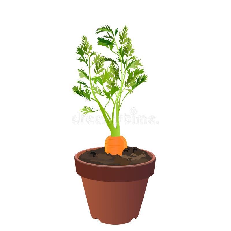 Morötter i en blomkruka vektor illustrationer