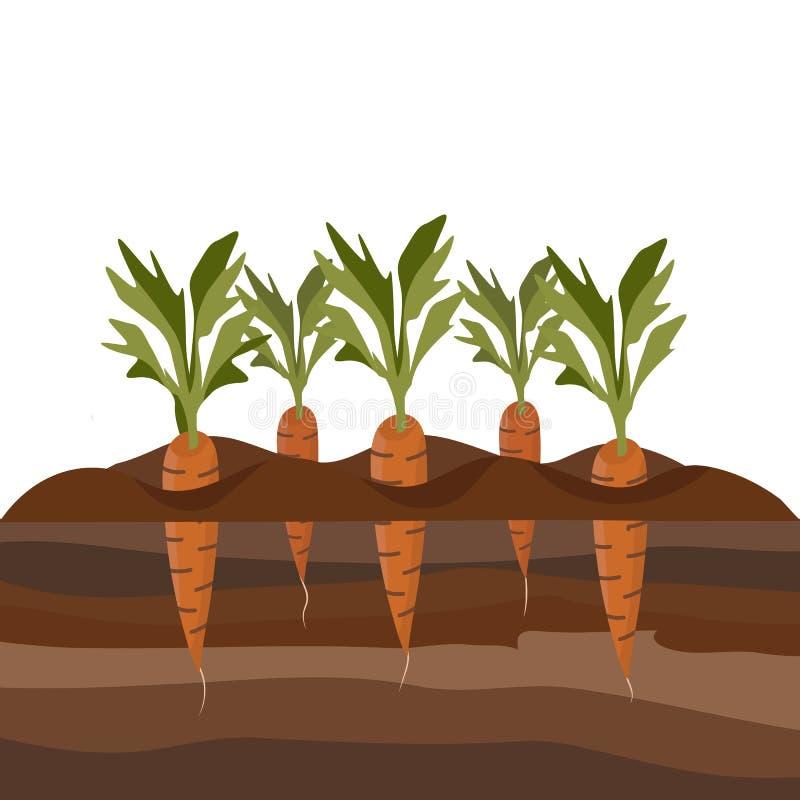 Morötter i trädgårdsängen royaltyfri illustrationer