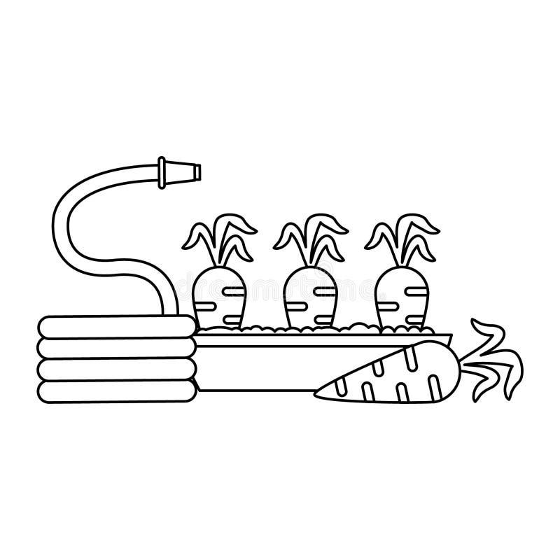 Morötter skördar och vattnar med slang i svartvitt royaltyfri illustrationer