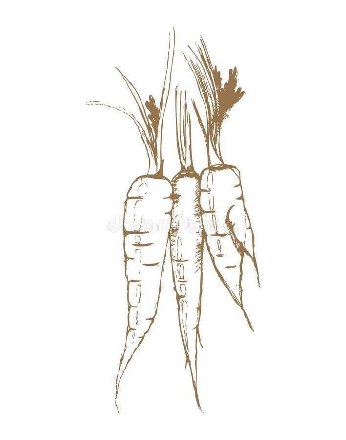 morötter tre vektor illustrationer