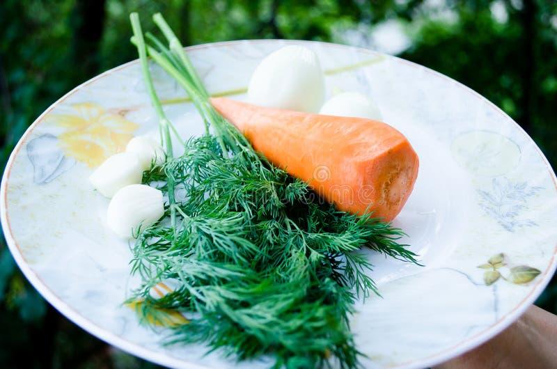 Morötter, vitlök och dill gr?n orange Gräsplaner och rotfrukt banta sunt Riktig n?ring Gr?nsaker Dekorativ etikett f?r design fotografering för bildbyråer