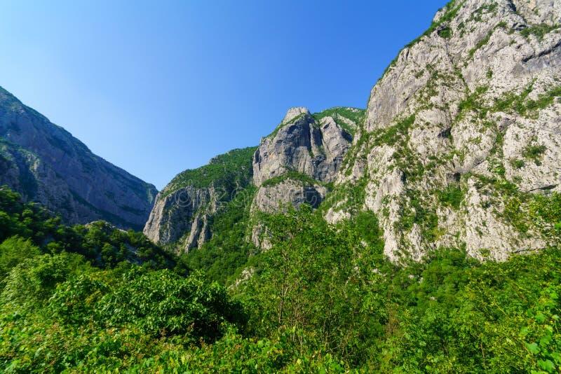 Moraca河和峡谷 库存图片