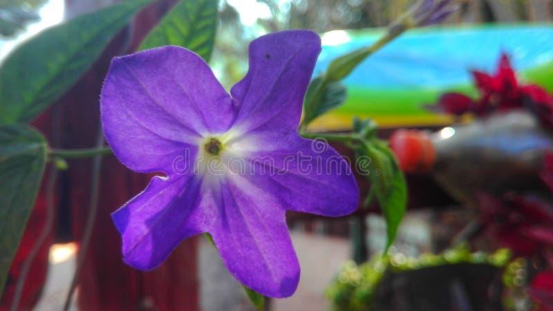Morada de Flor imagens de stock royalty free