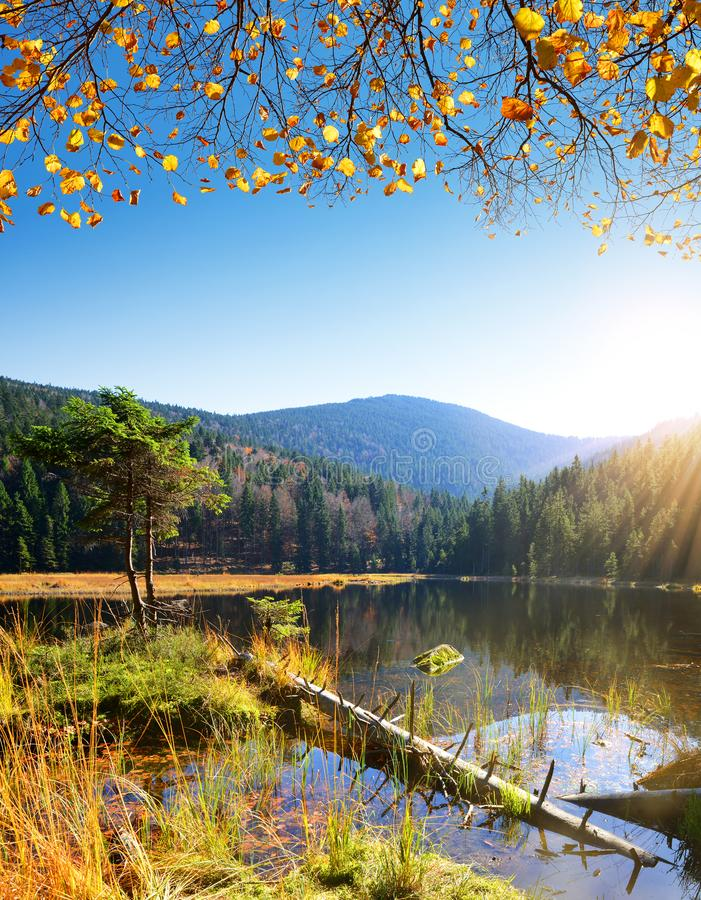 Moraine湖克莱纳Arbersee在国家公园巴伐利亚人森林里 库存照片