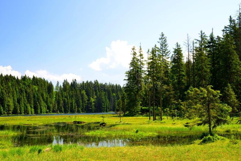 Moraine湖更总的Arbersee 德国 图库摄影