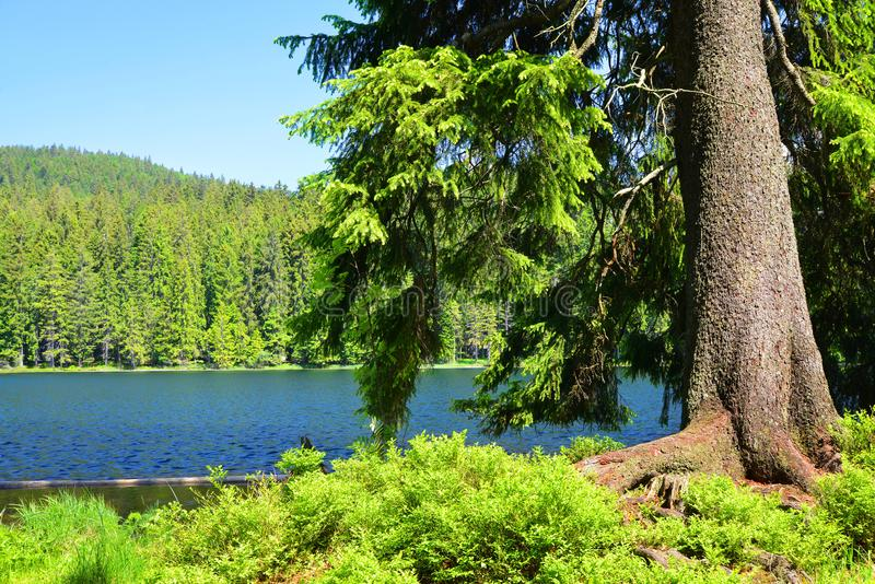 Moraine lake Grosser Arbersee in Bavarian forest. Germany. stock photography
