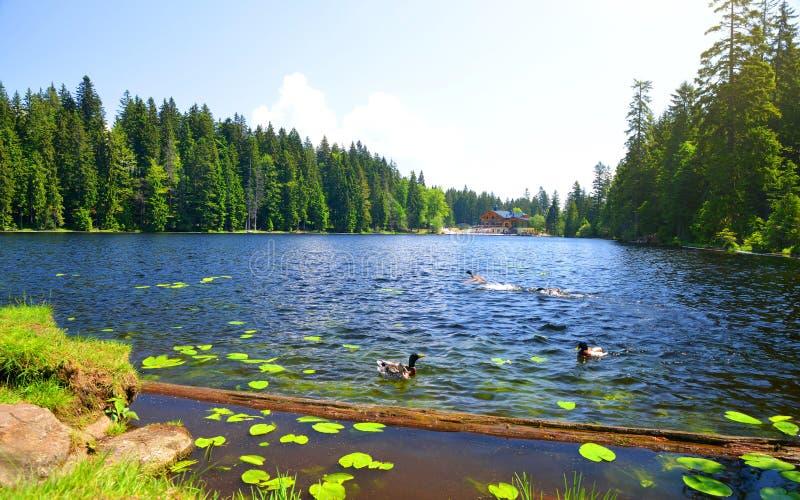 Moraine lake Grosser Arbersee, Germany. stock photography