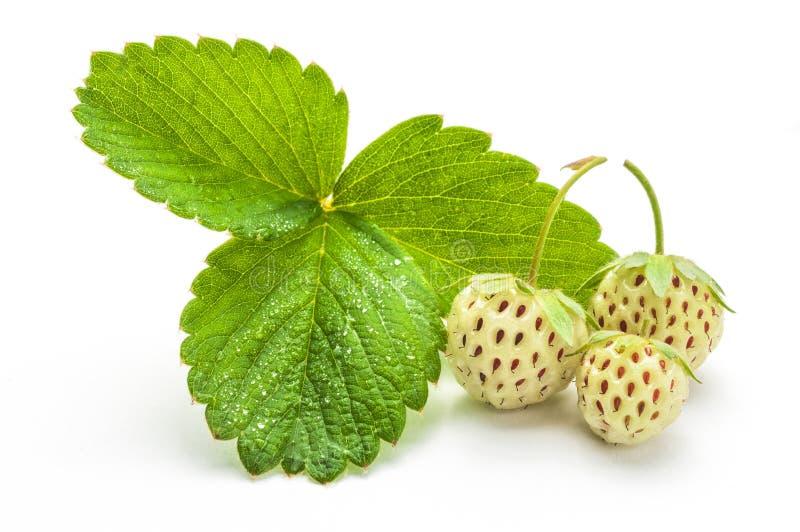 Morango de Pineberries esse gosto como o abacaxi com folhas mim imagem de stock