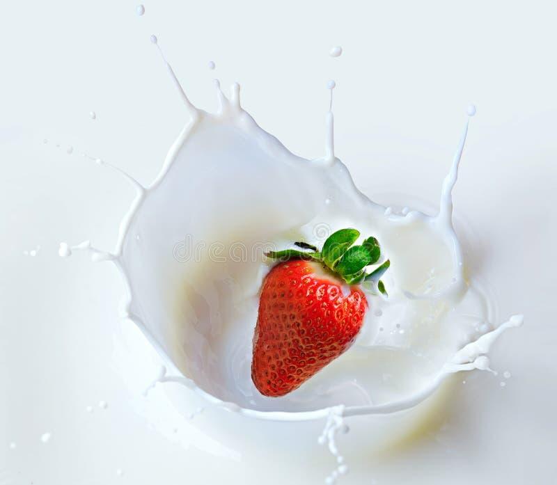 A morango de queda está espirrando no leite fotografia de stock