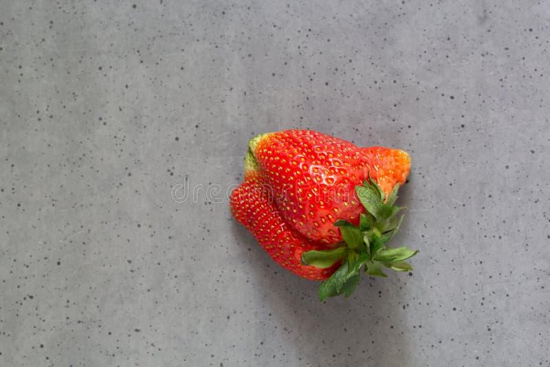 Morango feia Fruto orgânico da forma imperfeita estranha no fundo cinzento do cimento Produto deformado, conceito do problema de  imagens de stock royalty free